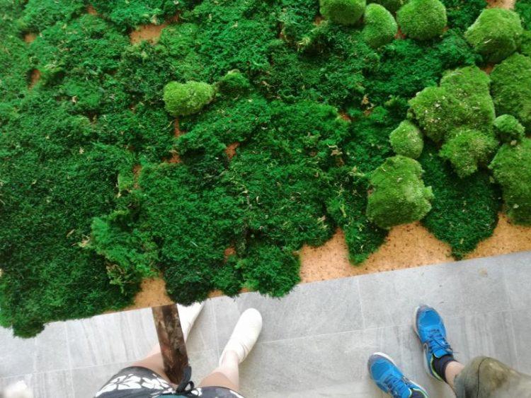 Zielony sufit